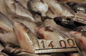 14,00 and 13,00 tag on raw fish meats