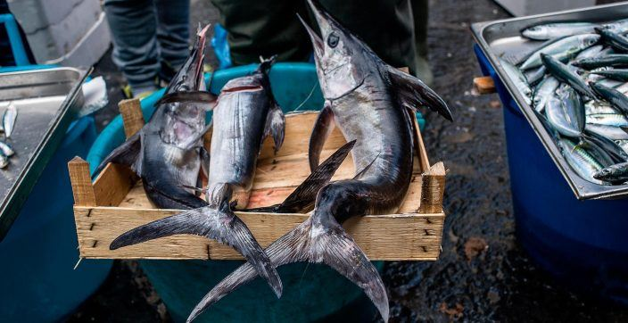 three sailfish placed on rack