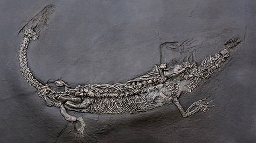 gray animal fossil