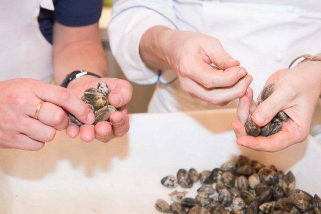 two person holding shells