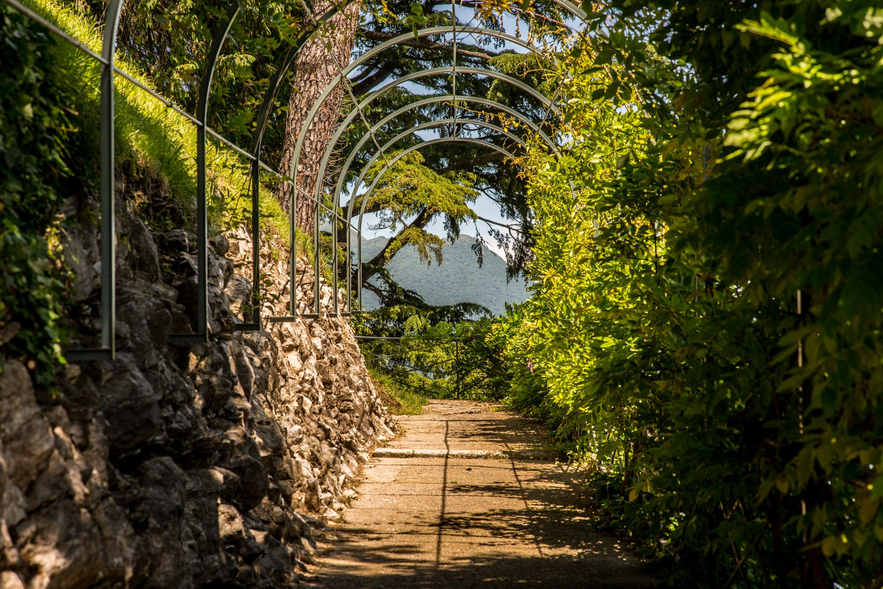 photography of arch canopy between wall rock and leafed trees