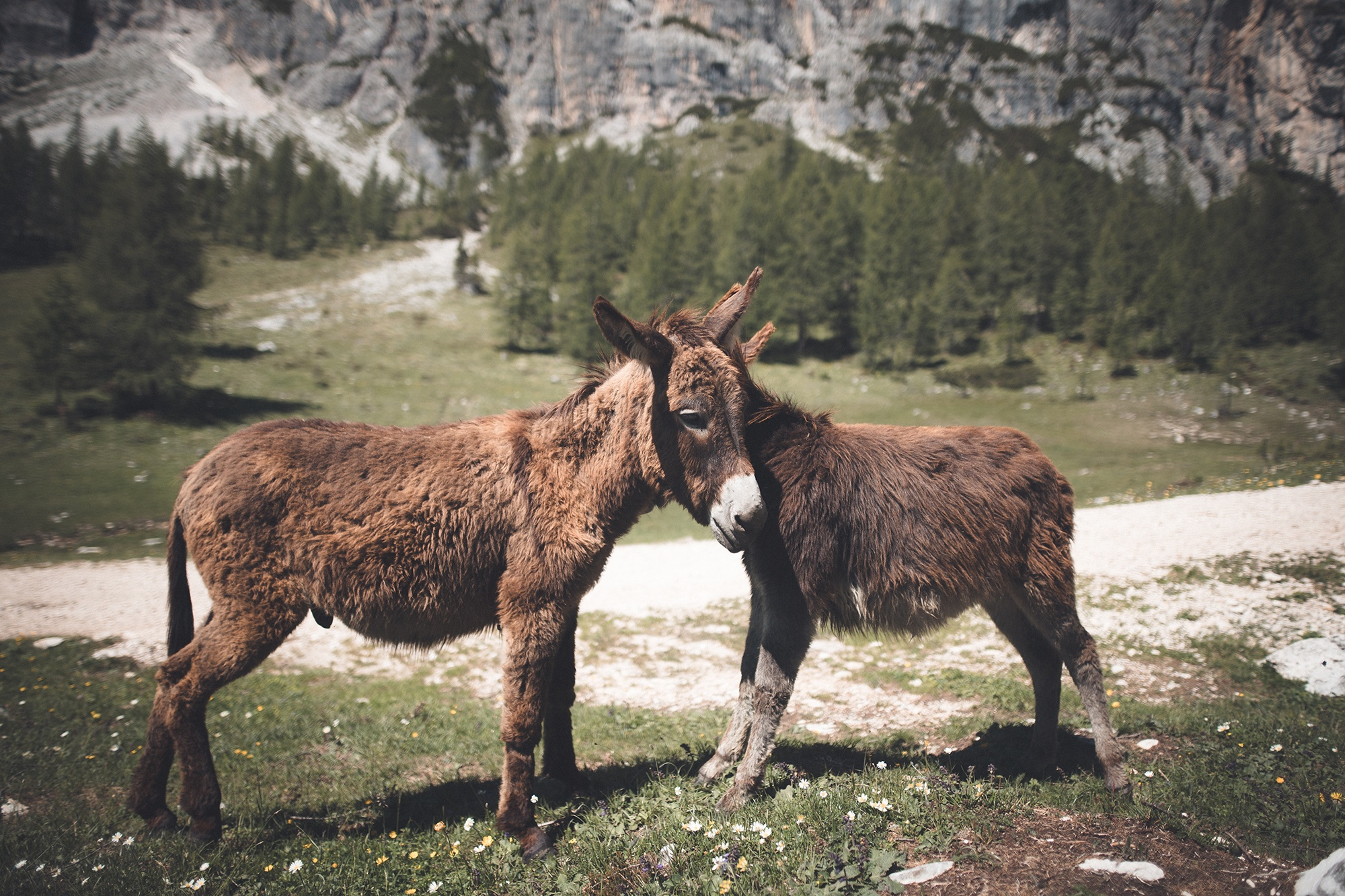 two donkeys standing on green grass
